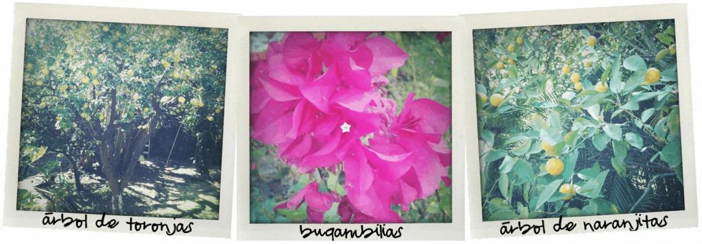 Fruit trees and flowers in Cuernavaca, Morelos, Mexico - theothersideofthetortilla.com