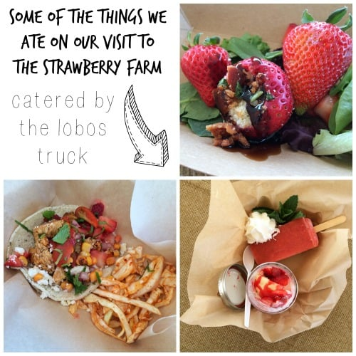 Lobos Food Truck strawberry recipes: More from this strawberry farm visit on theothersideofthetortilla.com