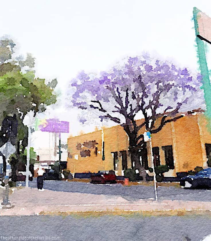 Jacaranda trees blooming in Coyoacán, Mexico City | More watercolor images of Mexico City on theothersideofthetortilla.com